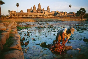 A man picking lotus near Angkor Wat