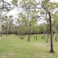 Koojarewon trees