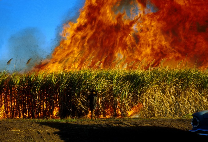 CSIRO_ScienceImage_1559_Fire_in_sugar_cane.jpg