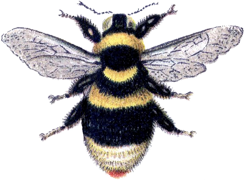 Bumble-Bee-Clip-Art-GraphicsFairy