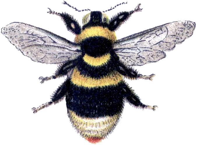 Bumble-Bee-Clip-Art-GraphicsFairy